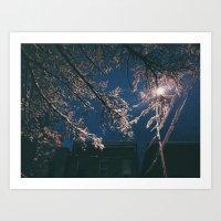 Snow Stuck on Trees at Night Art Print