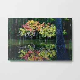 Autumn In The Swamp Metal Print