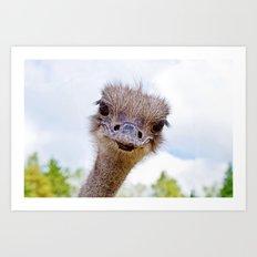 Ostrich portrait Art Print