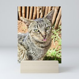 Weird Cat (Lanai Cat Sanctuary) Mini Art Print