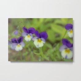 Beautiful flowers Metal Print
