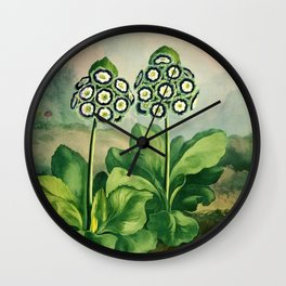 Auriculas : Temple of Flora Wall Clock