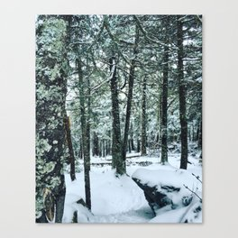 Spring Snow Canvas Print
