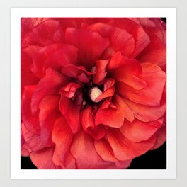 red spring flower Art Print