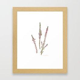 Heather plant Framed Art Print