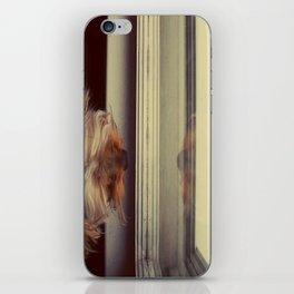 Yorkie Daydreaming iPhone Skin