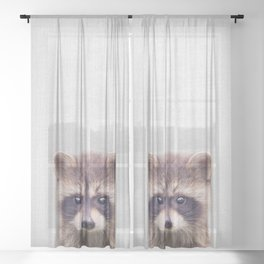 Raccoon - Colorful Sheer Curtain