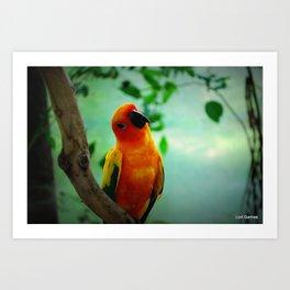 Beautiful Parrot Art Print
