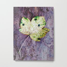 Sycamore leaf against tree bark. Metal Print