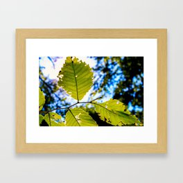 End of Summer Leaves Framed Art Print
