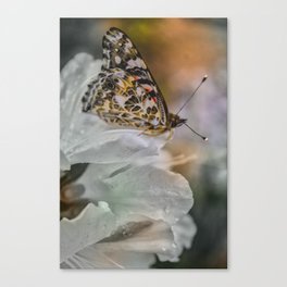 Butterfly in Soft Rain Canvas Print