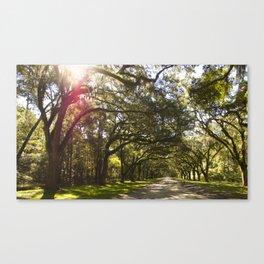 Wormsloe Sunbeams Canvas Print