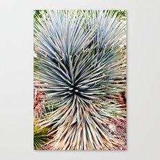 Arizona Desert Botanical Gardens Canvas Print