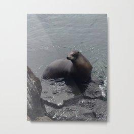 Sealion in the Galapagos Metal Print