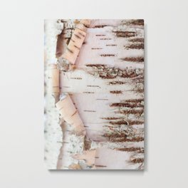 Birch Wood Metal Print
