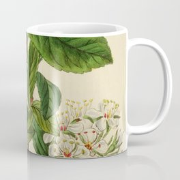 Edwards' botanical register 1836 Coffee Mug