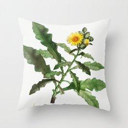 Sow thistle (Sonchus fruticosus n Laitron arbrisseau) from Traite des Arbres et Arbustes que lon cul Throw Pillow