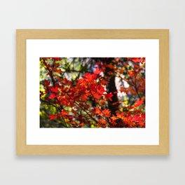 Red Fall Foliage Framed Art Print