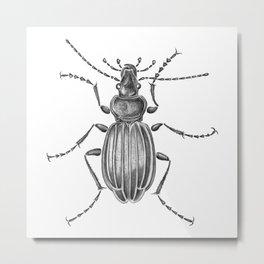 Beetle 15 Metal Print