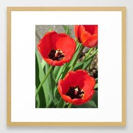 Vibrant Red Tulips Framed Art Print