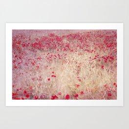 Fields of poppies Art Print