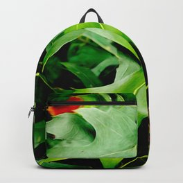 Maple Leaves Changing Color In Autumn Backpack