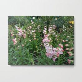 Towers of Flowering Foxglove Metal Print