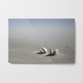 2 shells on the beach,during a sand storm | nature photo | fine art photo print | travel photography Metal Print