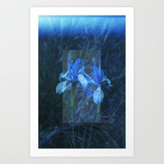 Iris on Film Art Print
