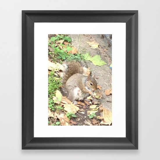 The Hungry Squirrel Framed Art Print