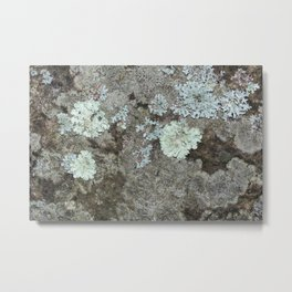 Lichen on granite Metal Print