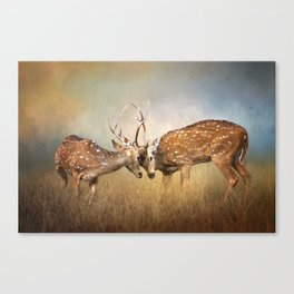 Two Deer Fighting - Wildlife Photography Canvas Print