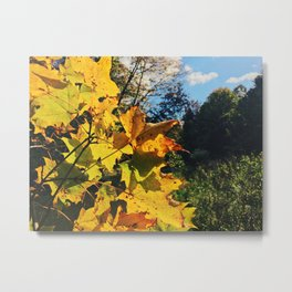 Golden leaves at fall Metal Print
