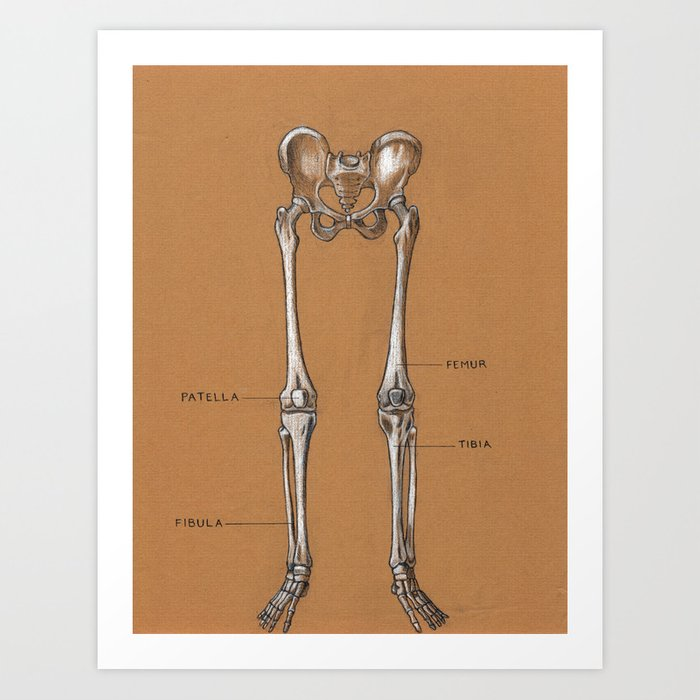 Jesse Young S Human Anatomy Drawing Of Skeletal Structure Of The Lower Body Circa 2005 Art Print By Jesseyoung Society6