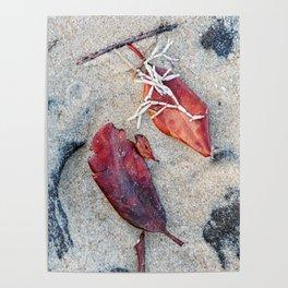 Coralline algae and dead leaf on sand Poster
