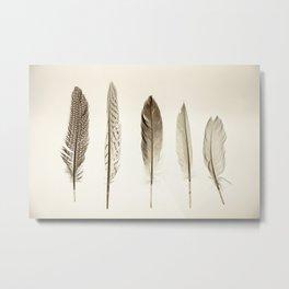 Collection Metal Print