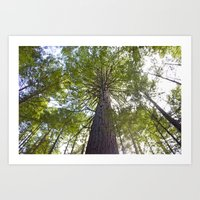 The Mighty Redwood Art Print