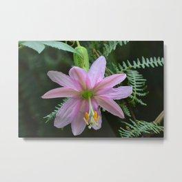 fleur exotique mauve à la Réunion Metal Print