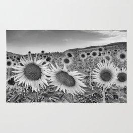 Sunflowers At night. Bw Rug