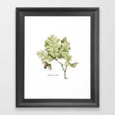 English Oak Framed Art Print