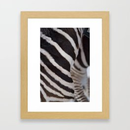 Zebra 02 Framed Art Print