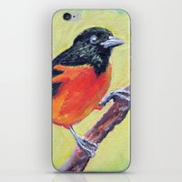 baltimore iPhone & iPod Skins featuring Baltimore Oriole by Art Project