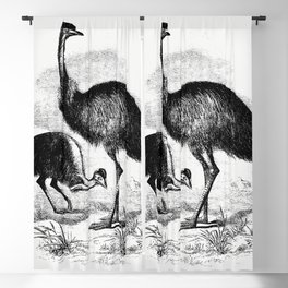 Cassowary from Adventures of a Gold-Digger (1856) Blackout Curtain