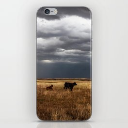 Life on the Plains - Cow Watches Over Playful Calf in Oklahoma iPhone Skin