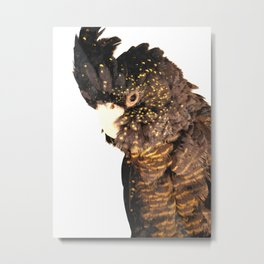 Black cockatoo illustration Metal Print
