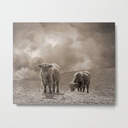 Scottish Highland Cattle and Clouds, No. 1 Metal Print