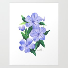 Watercolor Plumbago Flowers Art Print