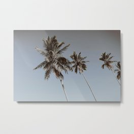 palm trees xii / brazil Metal Print