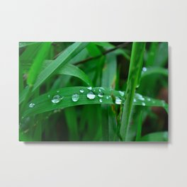 Damp Afternoon Metal Print