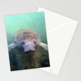 Watercolor Manatee 22, Three Sisters Spring, Crystal River, Florida Stationery Cards